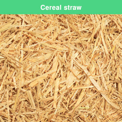 Cereal straw