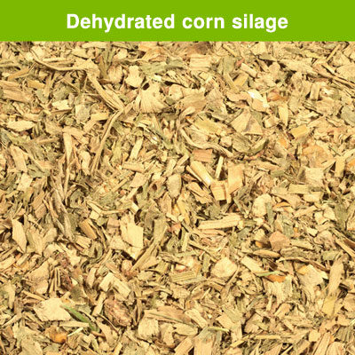 Dehydrated corn silage