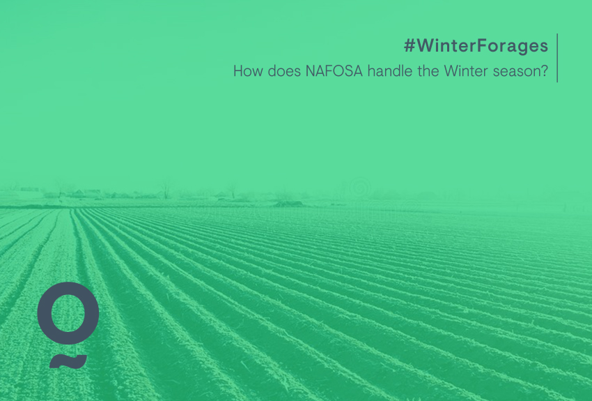What winter is like at NAFOSA plants
