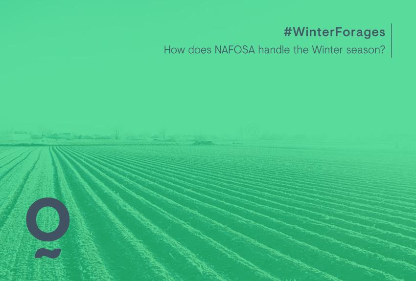 Cómo es el invierno en las plantas de NAFOSA