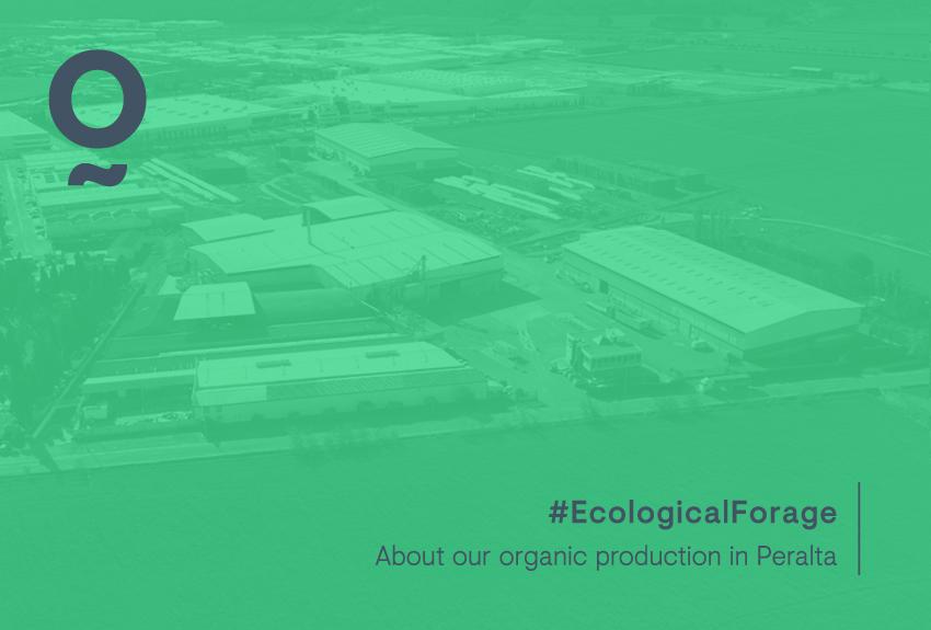 Conoce nuestra producción ecológica en Peralta