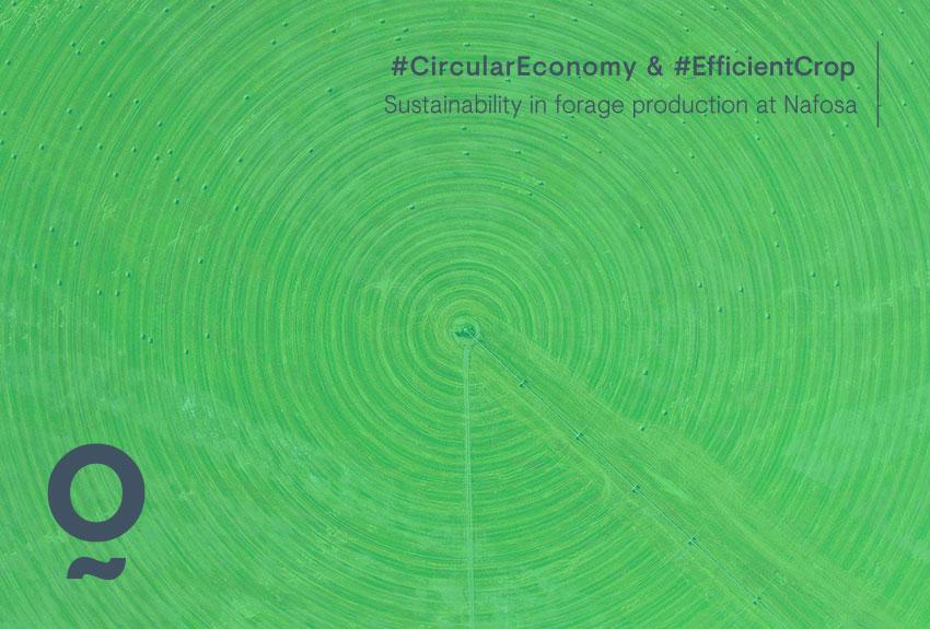 Sostenibilidad y economía circular en la producción de forrajes en Nafosa