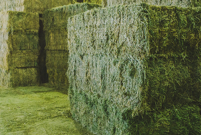 001-peralta-producion-de-alfalfa-en-spain-nafosa