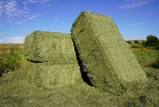 002–gran-variedad-de-formatos-paquetes-alfalfa-y-forrajes
