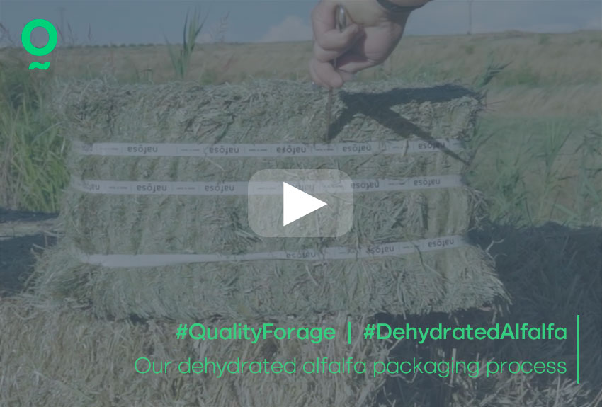 Our dehydrated alfalfa packaging process