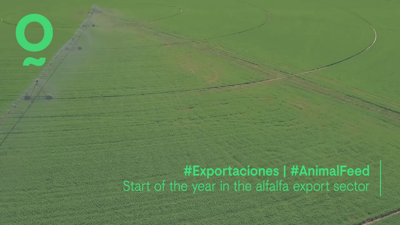 Start of the year in the alfalfa export sector