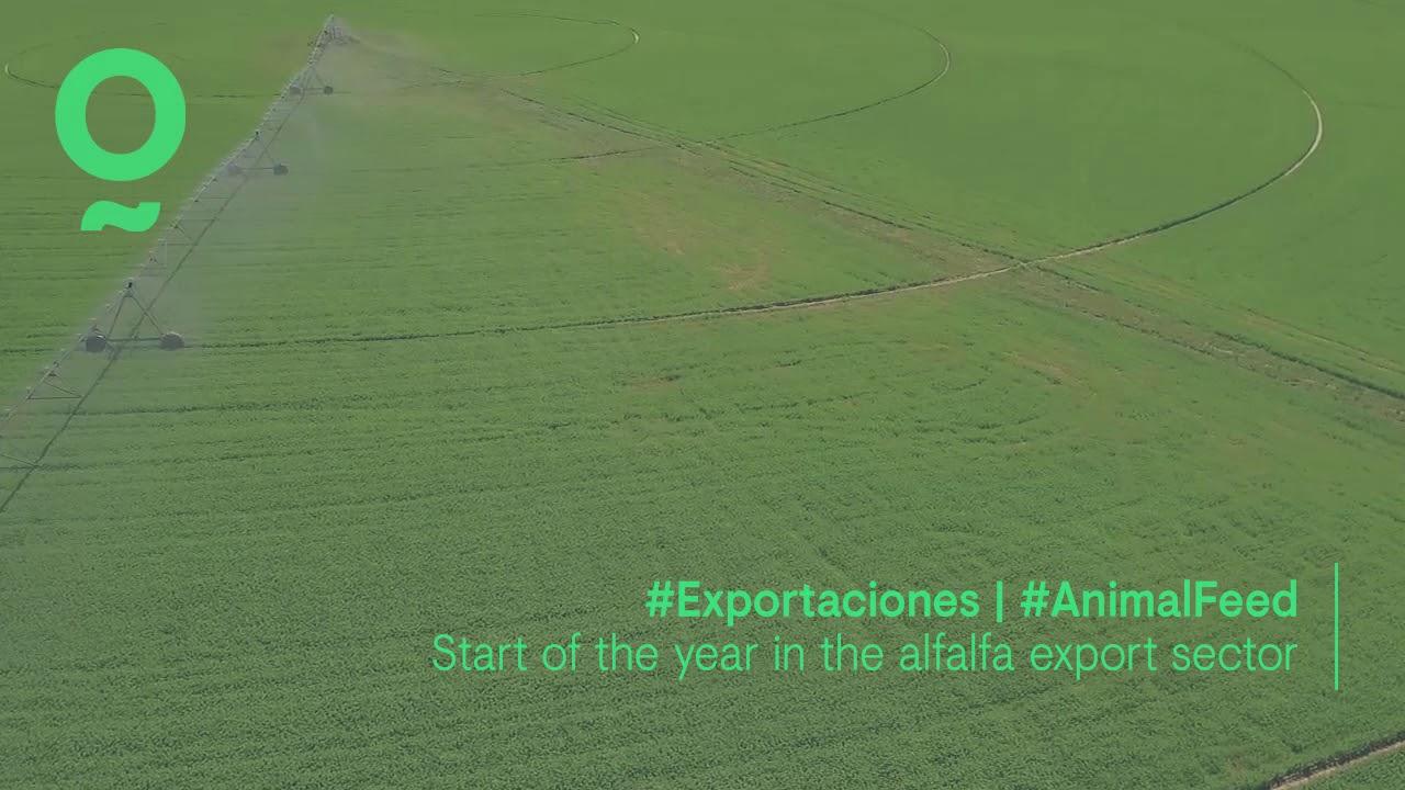 Comienzo de año en el sector de la exportación de alfalfa