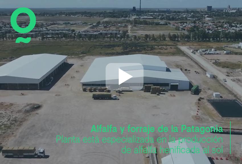 """Are you familiar with the """"Alfalfa y forraje de la Patagonia"""" site?"""