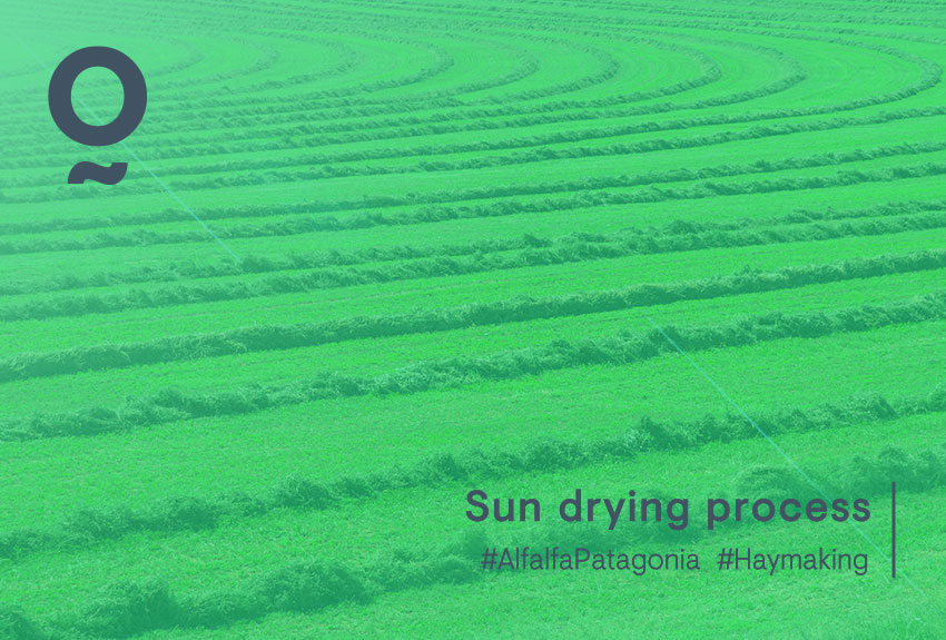 Alfalfa from Patagonia – Sun drying process