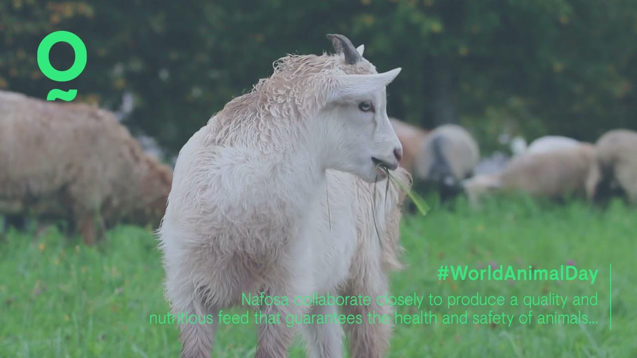 Nafosa celebra el Día Mundial de los Animales